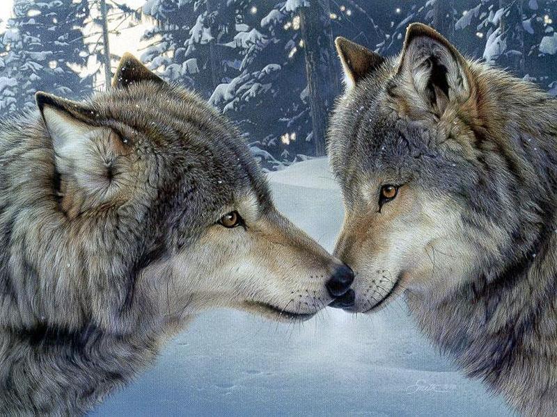 wolf gallerie